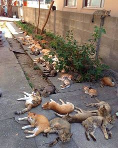 Let's plant catnip in the garden they said. It prevents mosquitos they said. what could go wrong they said.
