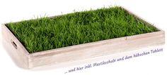 Echtes Gras für Deine Katze auf einer Fläche von 60x40cm