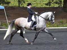 Grabd Prix dressage rider, Alexis MV, shows off her beautiful Grand Prix…
