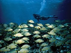 Scuba diving at Looe Key - Little Palm Island Resort & Spa, (just off Little Torch Key on the Florida Keys coastline)
