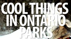 Cool Things in Algonquin Provincial Park