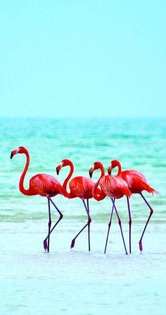 Flamingos on the beach at Isla Holbox Island, Mexico Pretty Birds, Beautiful Birds, Animals Beautiful, Animals And Pets, Cute Animals, Tier Fotos, Jolie Photo, Pink Flamingos, Beautiful Creatures