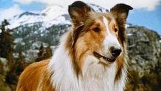 Ainda sou do tempo: ... da Lassie