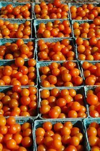Canning Cherry Tomatoes