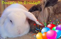 Apr 2017!! HI THERE! I JUST WANTED TO TELL YOU IT'S MY BIRTHDAY TODAY!! AND EVERY DAY ALL APRIL! YOU SEE MOM DOESN'T KNOW MY EXACT BIRTH DATE, ONLY THAT IT WAS IN APRIL 2000, AND THEREFORE WE'VE MADE AN AGREEMENT I'M ALLOWED CELEBRATING MY BIRTHDAY ALL APRIL!! HOW ABOUT THAT!! ISN'T THAT AWSOME! I'M TREATED LIKE A KING ALL MONTH AND BRO HAS TO FULFIL ALL OF MY DEMANDS WHAT SO EVER FOR A MONTH!! THIHIHIHIIIII  HAPPY BIRTH MONTH TO ME!! HAPPY BIRTH MONTH TO ME!! Duncan on D&D by Inger Johanne…