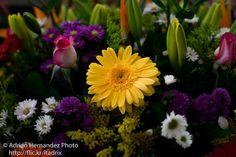 24-01-2016-8 | por itadrix Hermosas flores, solo se dan en una tierra bendecida...