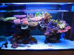 Tips for awesome aquascapes Saltwater Aquarium Advice Hello! Here we have best photo about saltwater aquarium aquascape. Aquarium Design, Saltwater Aquarium Setup, Coral Reef Aquarium, Saltwater Fish Tanks, Marine Aquarium, Aquarium Fish Tank, Marine Fish Tanks, Marine Tank, Nano Reef Tank