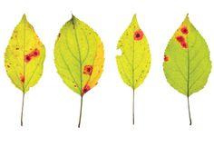 Como evitar ferrugem nas plantas - Pragas e Doenças - Plantas, Flores e Jardins