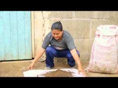 En este video explico y demuestro el proceso de la siembra que consiste primeramente en el drenado del material durante 24 horas antes de la siembra, al mome...