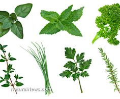 Five must-have herbs for healing your body and mind