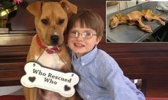 Mother recalls autistic son's change after adopting rescue pooch... a near death pit bull. ♥