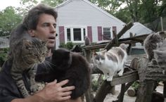 On a typical residential street in Medford, NY sits a home that is anything but typical. Chris Arsenault's modest Long Island residence serves as a shelter, rehab and nursery for more than 300 cats. All of the cats at Arsenault's Happy …
