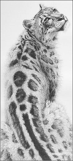 Sabu_snow_leopard_art_gary_hodges                                                                                                                                                                                 More