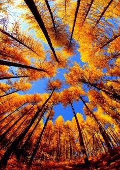 Gorgeous view of trees from below