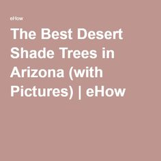 The Best Desert Shade Trees in Arizona (with Pictures) | eHow