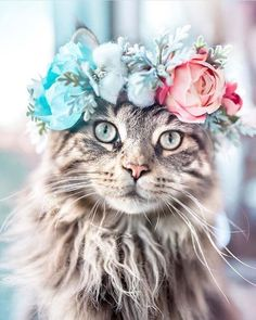 Flower Crown Cat Dog - This Artist Is Making Flower Crowns For Animals And They Look Majestic Informationen über Katzen - Cute Kittens, Cats And Kittens, Cats Meowing, Cute Baby Animals, Animals And Pets, Funny Animals, Wild Animals, Beautiful Cats, Animals Beautiful