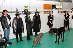 Party Dogs at Halloween