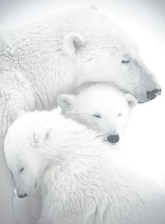 Beautiful family.