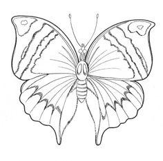 Kelebek Butterfly Vector Filografi