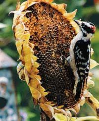 Thrifty bird projects--including how to make a sunflower bouquet & a mosaic bird bath!