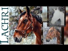 Speed Painting a horse in oil & acrylic paint - Time Lapse Demo by Lachri - YouTube