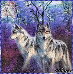 Blingee Wolves | Blingee was created with Blingee Plus! Upgrade now! Install Blingee ...