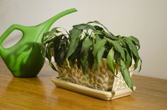 Houseplant Troubleshooting: Pinpointing Pests, Disease Or Environmental Issues Indoors - Houseplants are nice to have around and they are a pleasure to grow when things go as they should. However, when your plant is looking puny instead perky, it can be difficult to pinpoint the reason. This article will help.