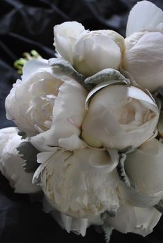 white Peonies with Dusty Miller  I'm in LOVE with this grey touch!!