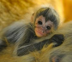 Zoo born doll****