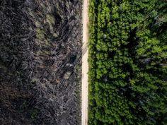 Un fossé naturel. Cela ressemble à une photo 'avant et après' qui serait faite à partir d'un montage. En réalité, la ligne de séparation sur cette photo est une route de terre. Les parcelles de forêt à gauche de la photo ont été incendiées puis interrompues avant d'atteindre la partie droite.