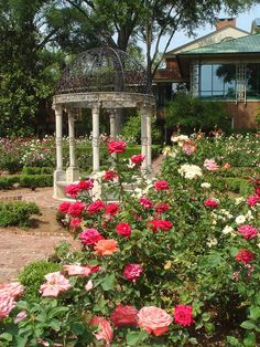 Furman Rose Garden - a beautiful sight Spring will bring my roses into bloom-maybe, will get a new bush Beautiful Roses, Beautiful Gardens, Rose Garden Design, Colorful Garden, Garden Gates, Garden Inspiration, Garden Ideas, Planting Flowers, Flowering Plants