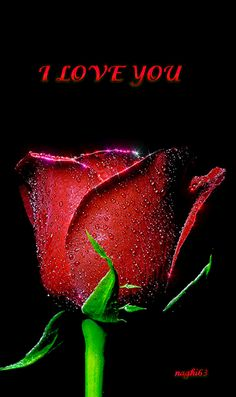 Photo Red Rose with Water droplets. by Vivek Roy on You Are Perfect, Love You, Picture Music Video, Rose Images, Water Droplets, Rose Wallpaper, Beautiful Roses, True Love, Red Roses