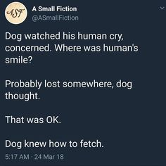 Dogs are wholesome Most Famous Memes, Dog Thoughts, Happy Thoughts, Funny Animals, Cute Animals, Animal Memes, Wholesome Memes, Faith In Humanity, Make Me Happy