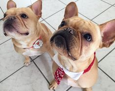6,959 Followers, 878 Following, 328 Posts - See Instagram photos and videos from Vince - French Bulldog (@vincecincy)