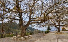 Central square in Pavliani village, Fthiotida Prefecture, central Greece Central Square, Greece, Mansions, House Styles, Plants, Landscapes, News, Mansion Houses, Paisajes