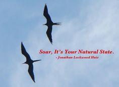 huie-soar-natural-state.jpg (600×438)