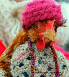Chicken Clothes, Chicken Hats, Chicken Costumes, Chicken Humor, Chickens And Roosters, Pet Chickens, Raising Chickens, Chickens Backyard, Keeping Chickens