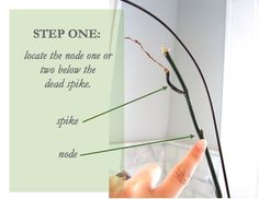 How to revive an orchid: no more wondering what to do once the blooms fall off and you're left with a stick in a pot!