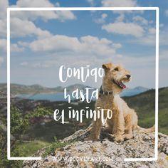 ¡Feliz día de Cantabria! #diadelamontaña #cantabriainfinita Y en #dogvivant creemos que la mejor forma de celebrarlo, es disfrutando de los tesoros de #cantabria con tu perro. Descubre en www.dogvivant.com (LINK IN BIO) todos los hoteles, bares, restaurantes, tiendas y actividades donde tú y tu perro sois bienvenidos el #diadecantabria ¡y todos los días del año!