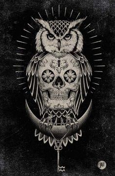 Owl and Skull illustration