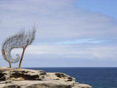 Wind Spiral by Bronwyn Berman