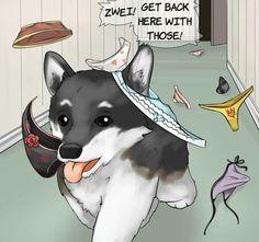 How to train your dog right Rwby Anime, Rwby Fanart, Anime Meme, Rwby Neo, Rwby Memes, Rwby Characters, Rwby Comic, Otaku, Team Rwby