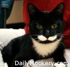 27 Cat Mustaches