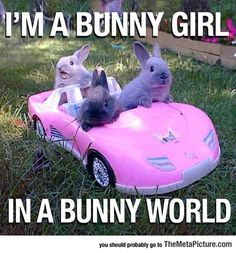 The bunny in the backseat...I can't get over that face lol