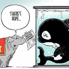 Your turn, SeaWorld! Cartoon by Andy Marlette Orcas, Stop Animal Cruelty, Sea World, Animal Welfare, Animal Rights, Dolphins, Cruelty Free, In This World, Animal Rescue