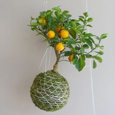 kokedama- love the wrap on this one