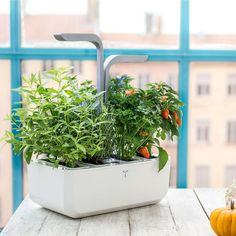 Designed for people who love to cook, the Smart Indoor Garden allows you to effortlessly grow herbs, edible flowers and even small vegetables in your home, all year round. Hydroponic Farming, Hydroponic Growing, Organic Gardening, Gardening Tips, Indoor Gardening, Gardening Zones, Faire Son Compost, Smart Garden, Organic Seeds