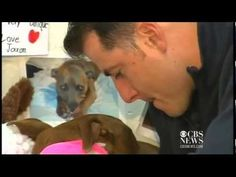 Pitbull saves owner from oncoming train...this story broke my heart. Such a great dog!