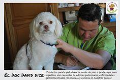 Los problemas que causan si tu perro ingiere aceite de pino o jarabes.