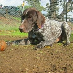 Moe – Let's Play Ball? | CA GSP Rescue